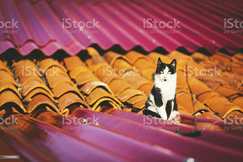 Cat on a Roof royalty-free stock photo