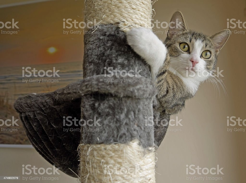 Cat on a scratching post stock photo