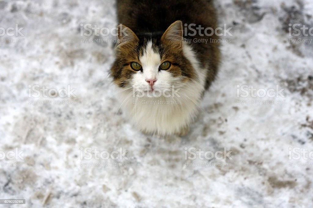 Cat on a snowy road. stock photo