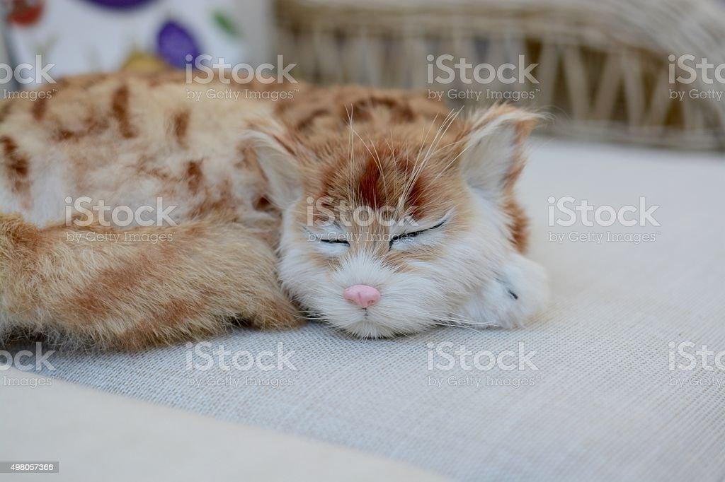 Cat on a sofa stock photo