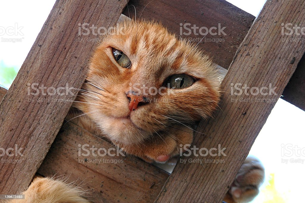 Cat on a Trellis stock photo