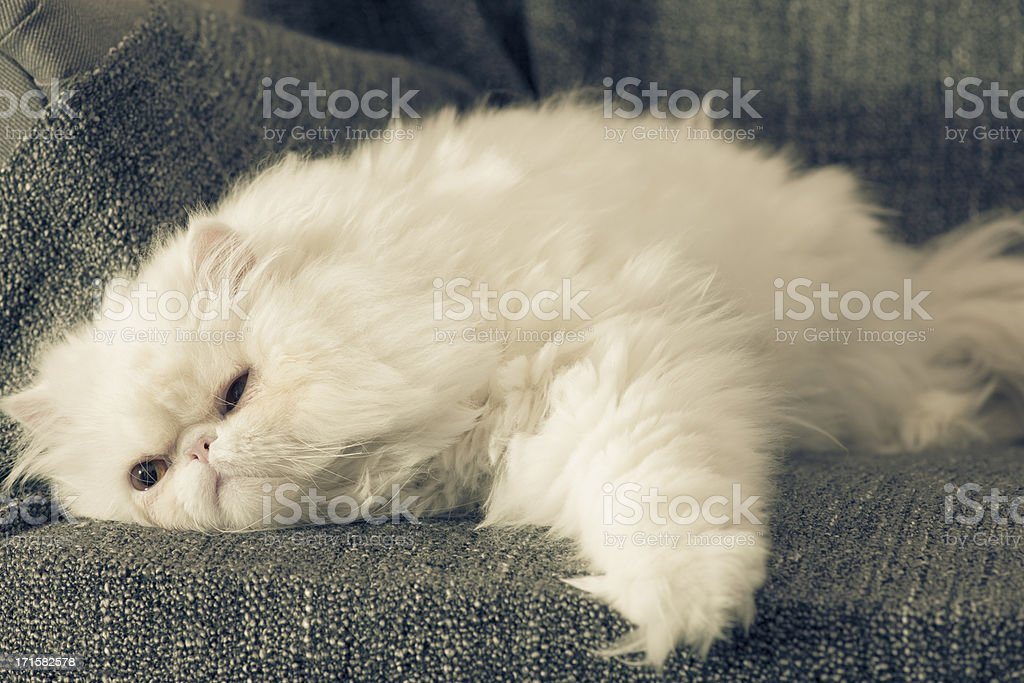 Cat on armchair stock photo
