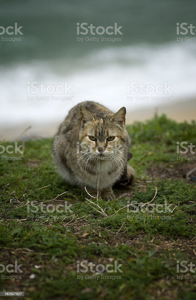 Cat on Beach royalty-free stock photo