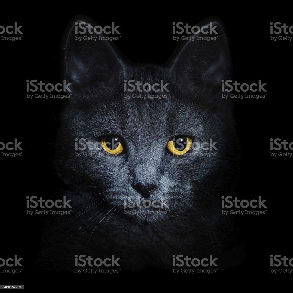 Cat on black background stock photo