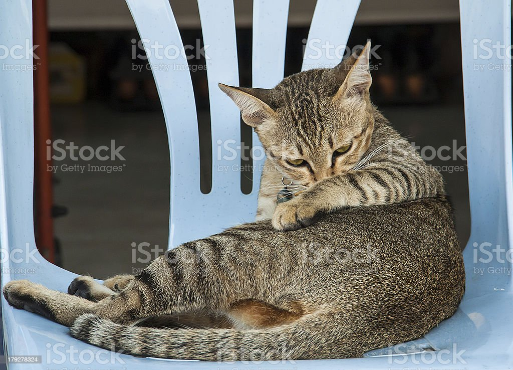 Cat on chair stock photo