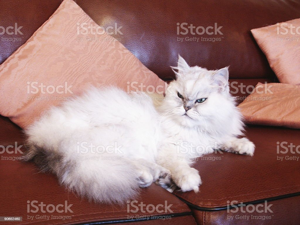 cat on couch stock photo