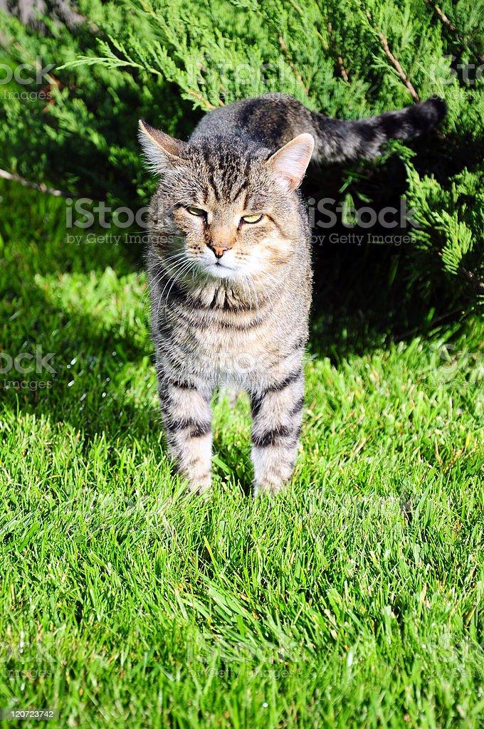 cat on garden royalty-free stock photo