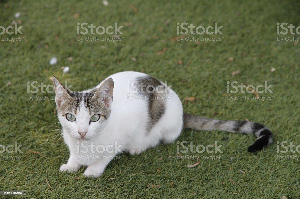 Cat on grass stock photo