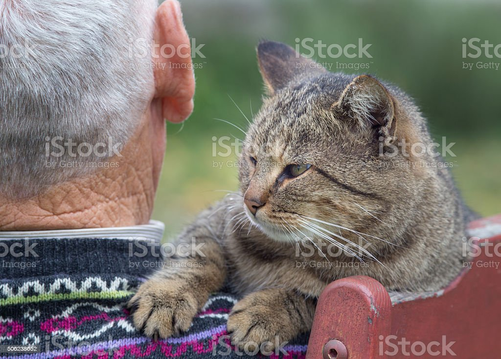 Cat on man's shoulder stock photo