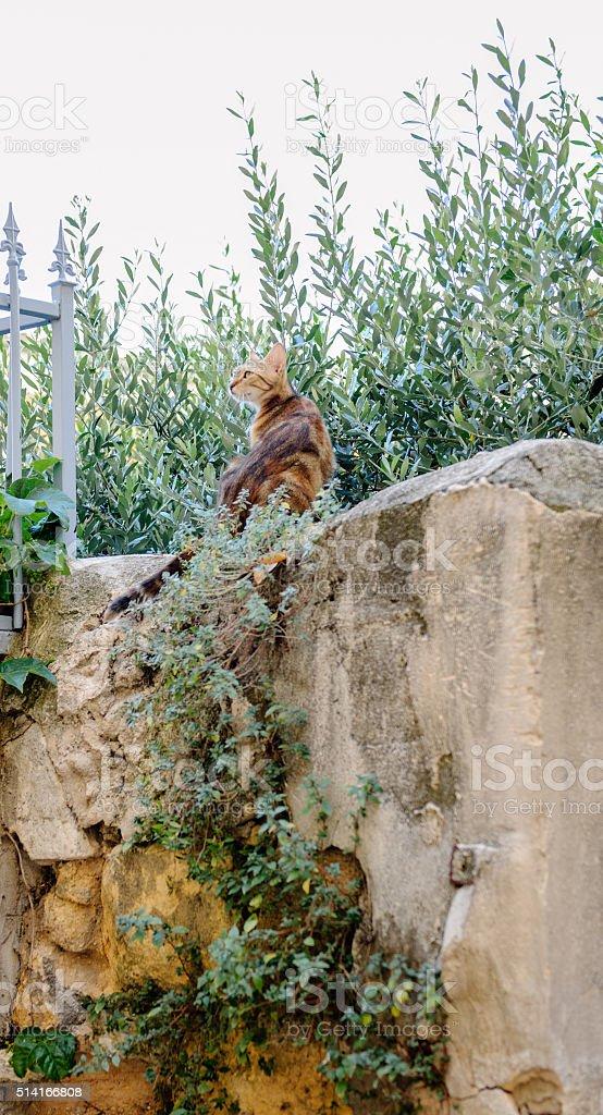 Cat on Marseille walls stock photo
