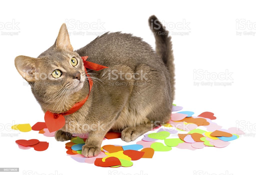 Cat on multicolored paper hearts stock photo