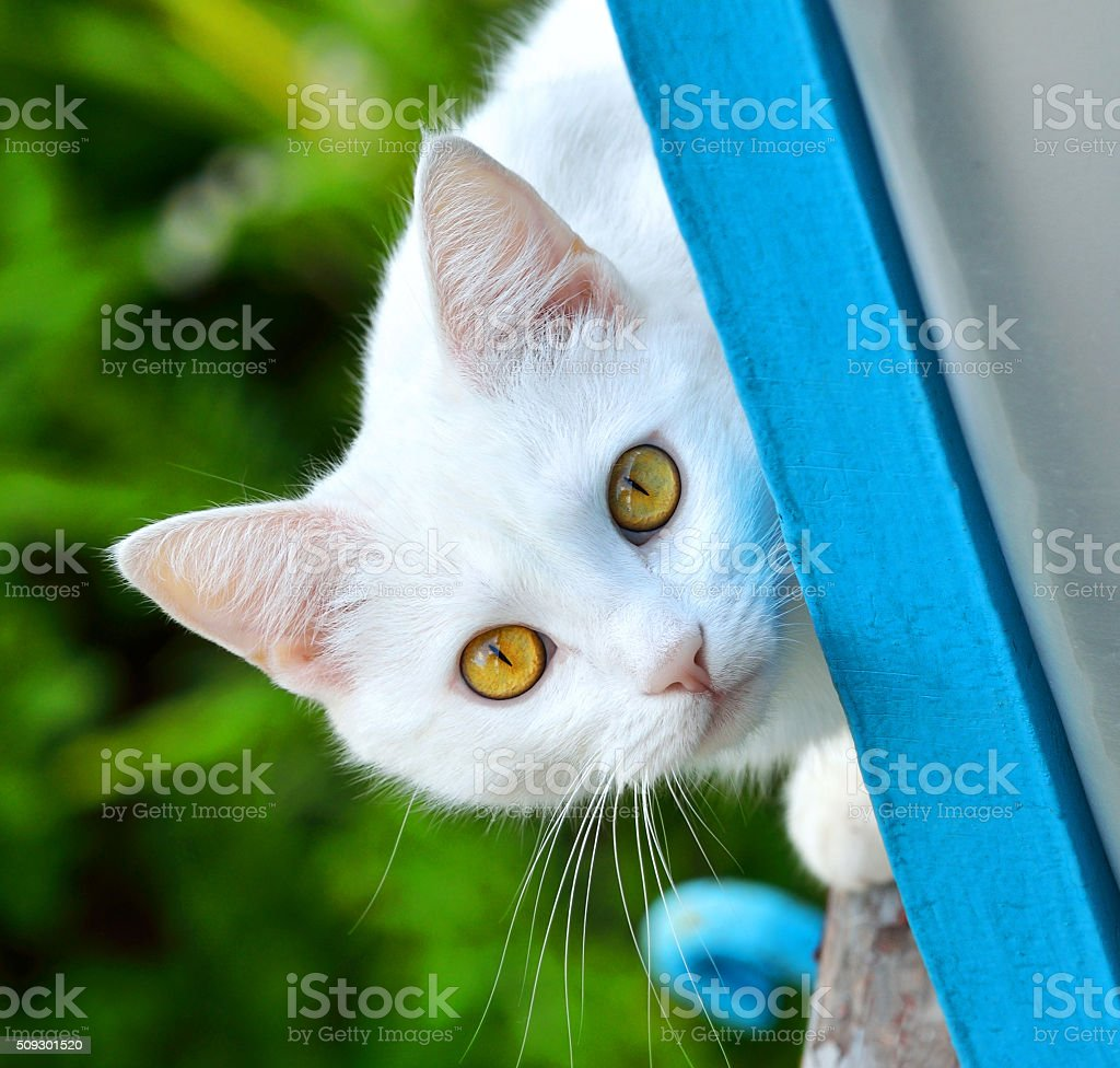 cat on nature stock photo