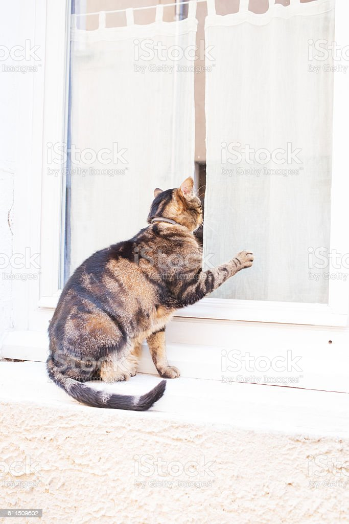 Cat on Provencal window sill, France stock photo