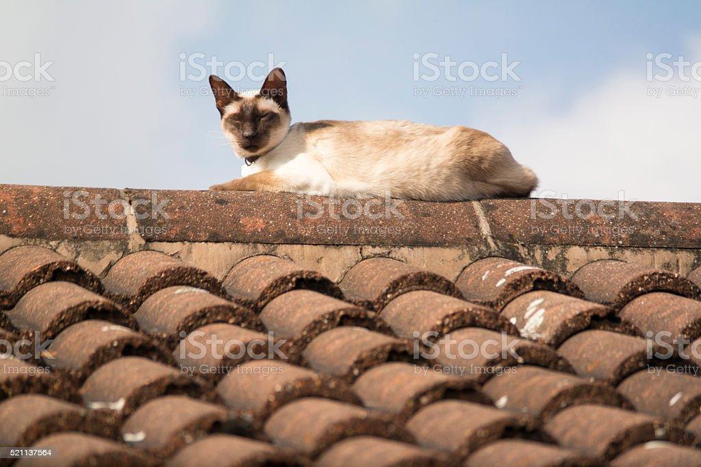 Cat on roof stock photo