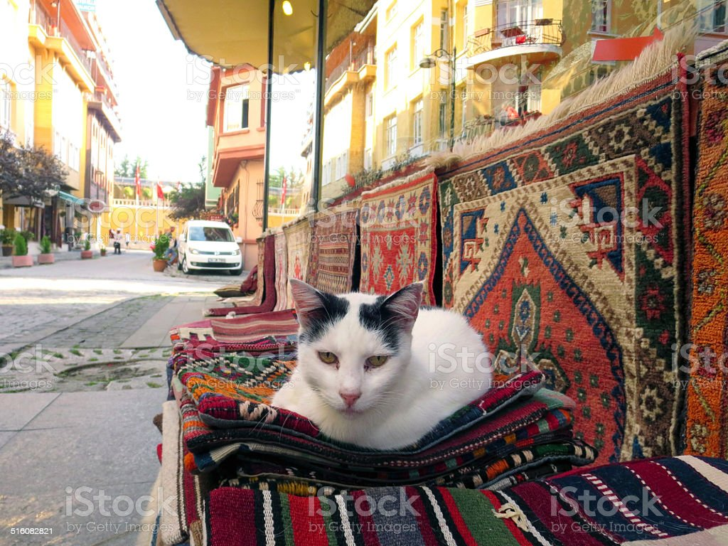 Cat on rugs in Istanbul stock photo