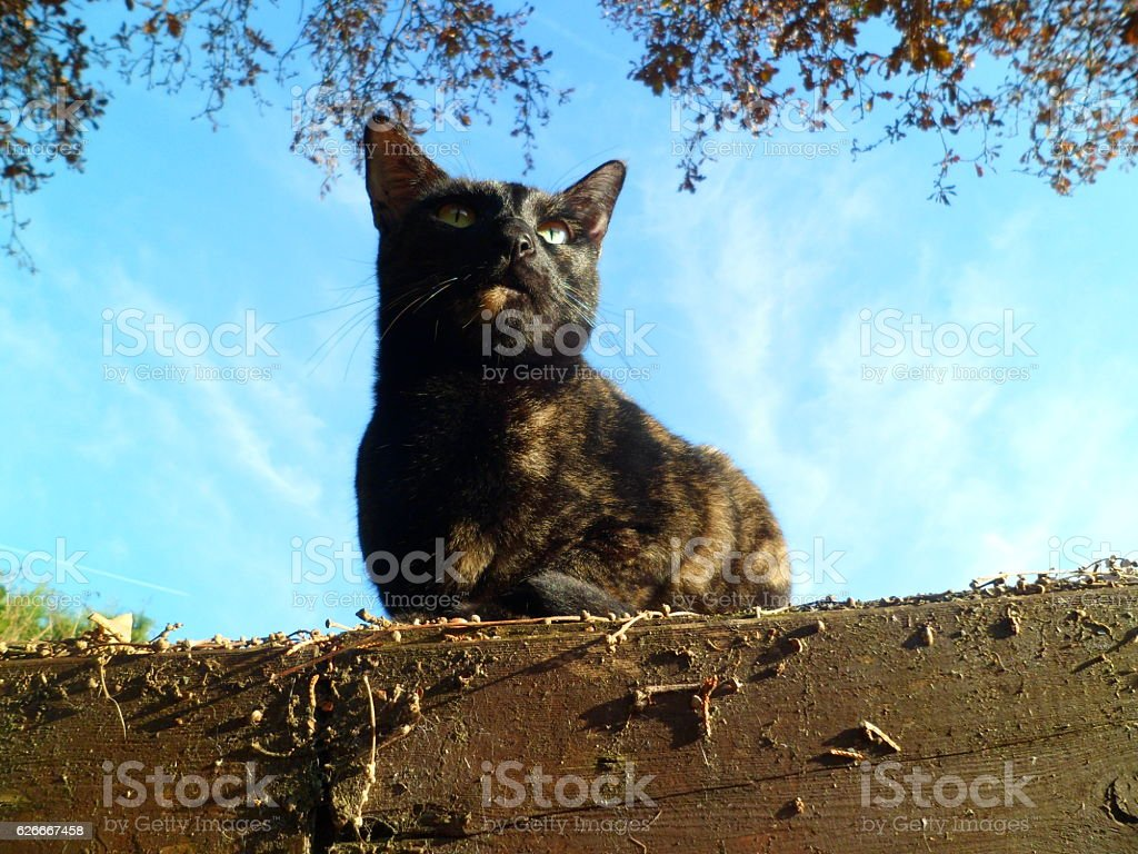 Cat on shed roof, gazing skywards stock photo