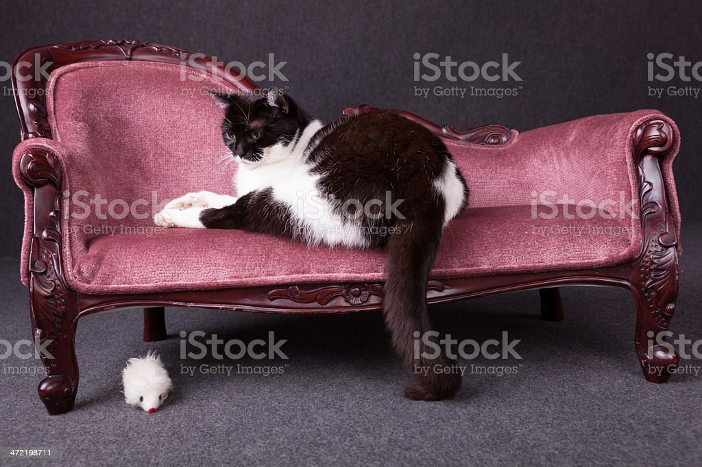 cat on sofa royalty-free stock photo