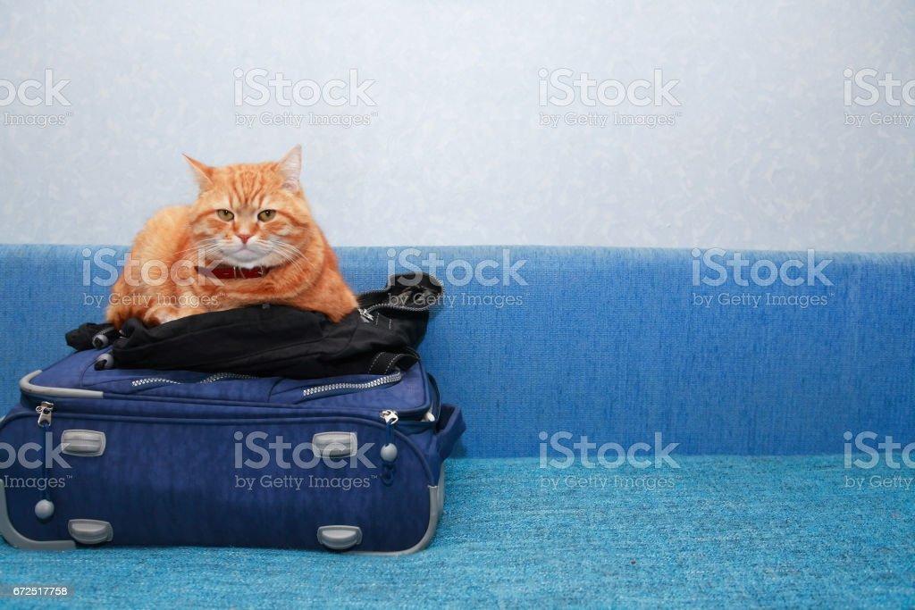 Cat On Suitcase stock photo