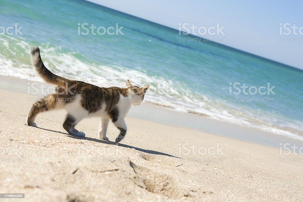 Cat on the beach royalty-free stock photo