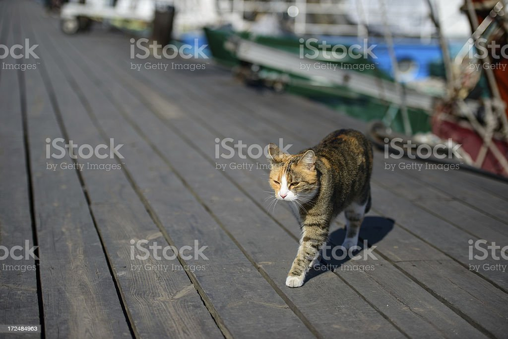 Cat on the dock royalty-free stock photo