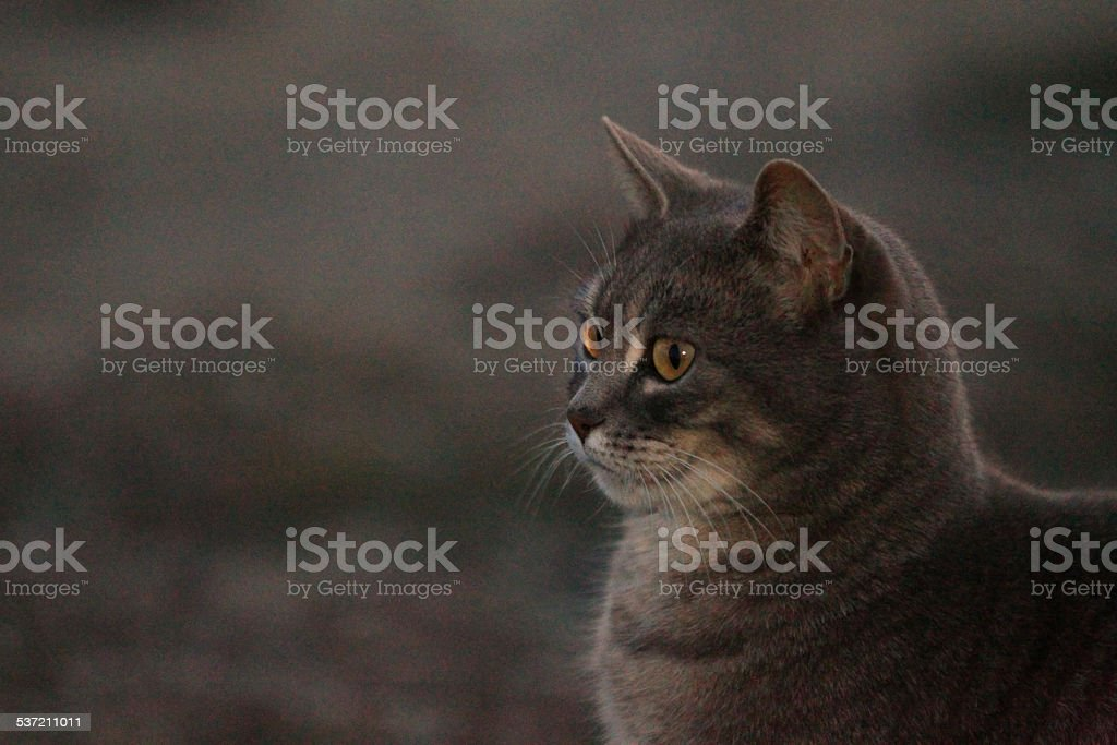 chat ? l'aff?t stock photo