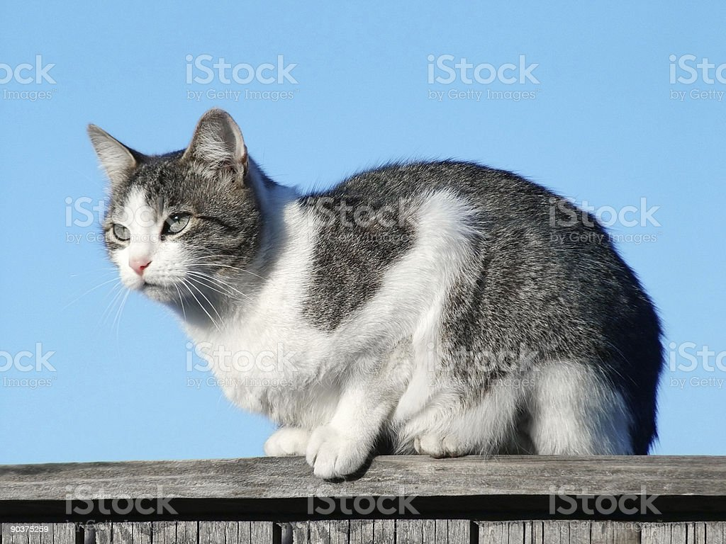Cat on the pale royalty-free stock photo