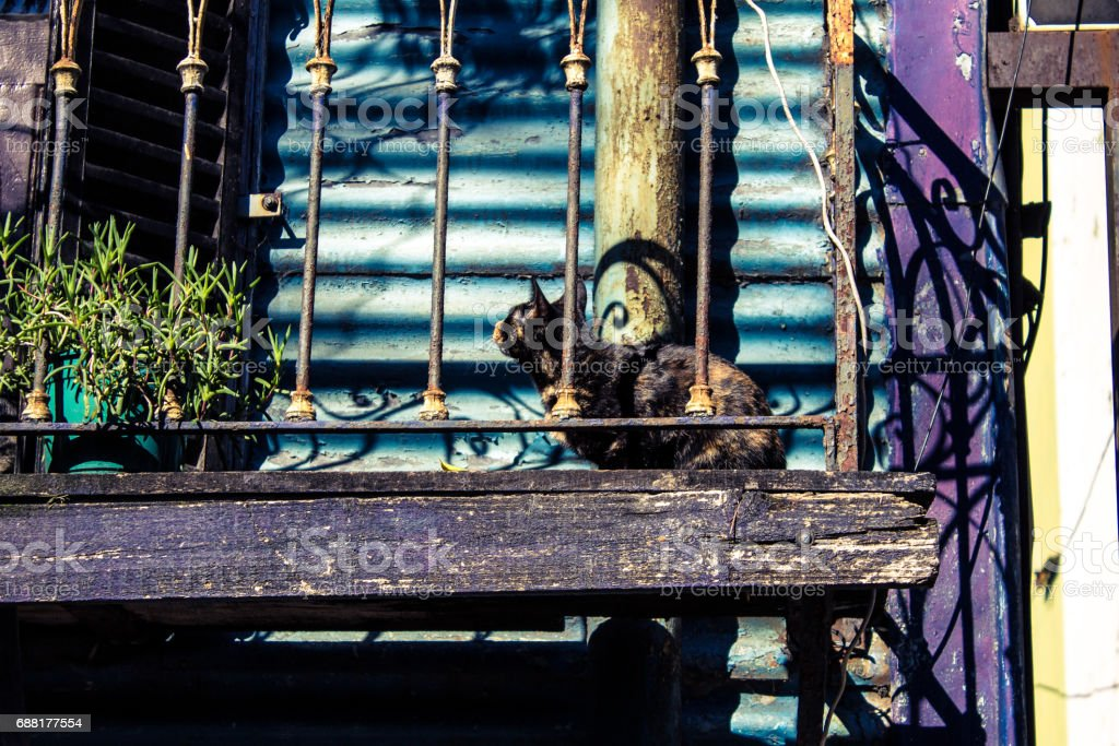 A cat on the porch of your house, La Boca, Buenos Aires, Argentina. stock photo
