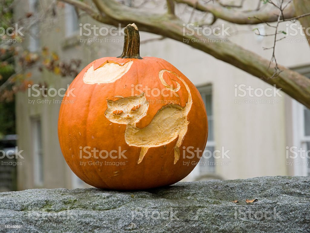 Cat on the Pumpkin royalty-free stock photo