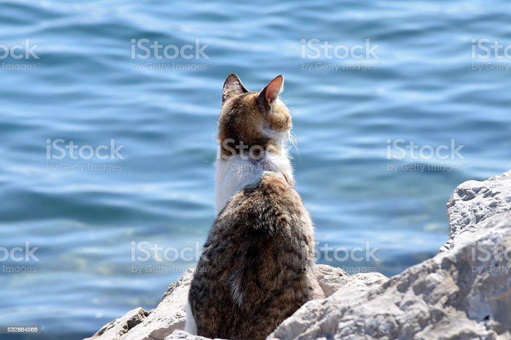 Cat on the rocky coastline stock photo