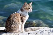 Cat on the rocky coastline