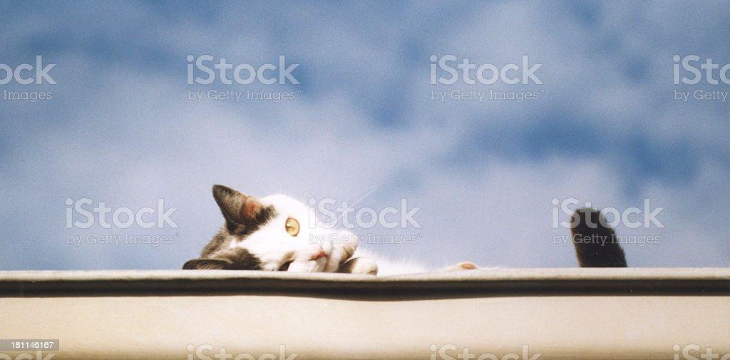 cat peeping en el último piso foto de stock libre de derechos