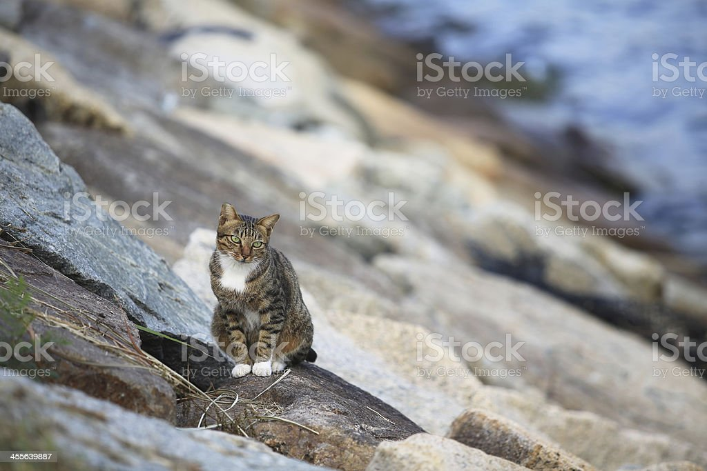 Cat on the waterfront royalty-free stock photo