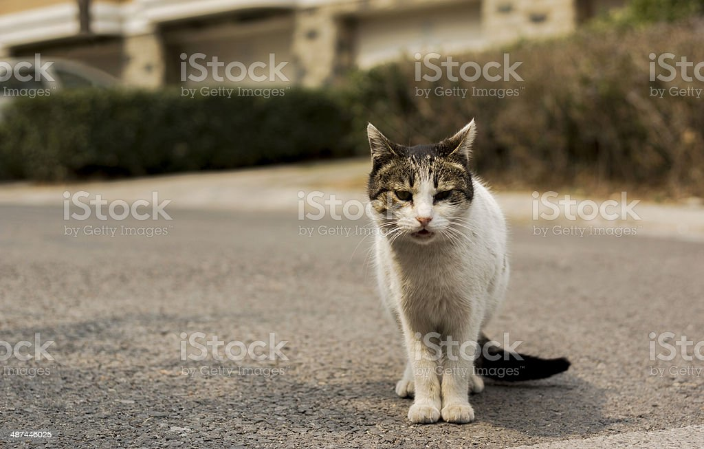 cat on the way royalty-free stock photo