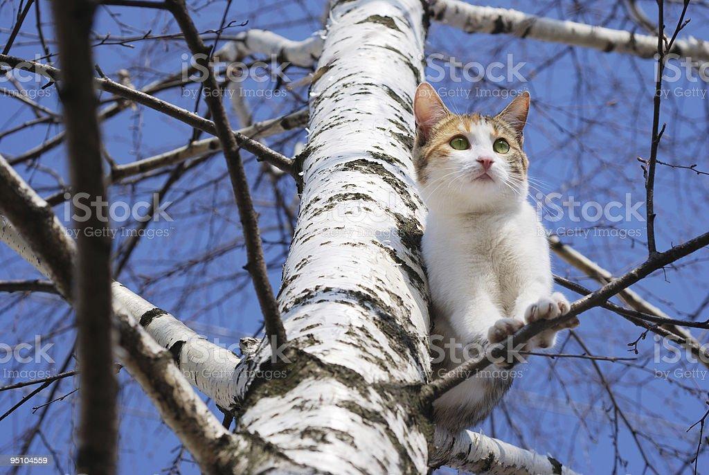 Cat on tree royalty-free stock photo