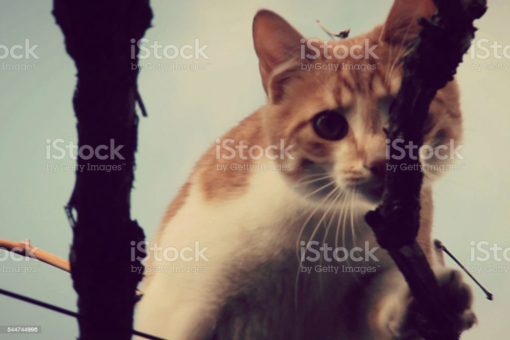 Cat on Trees stock photo