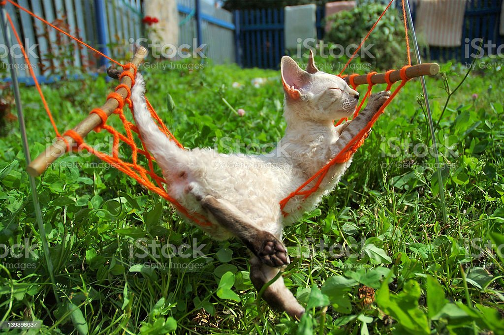 cat on weekend royalty-free stock photo