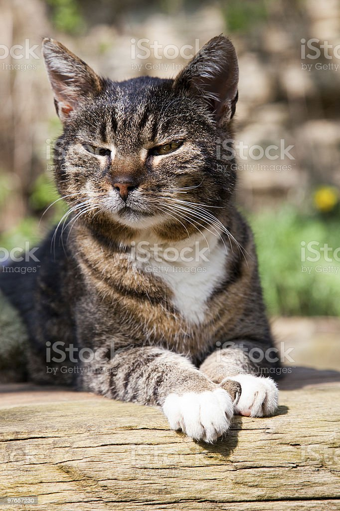 cat on wooden table stock photo