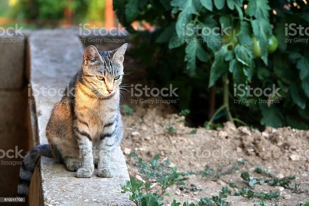 Cat Outdoor stock photo