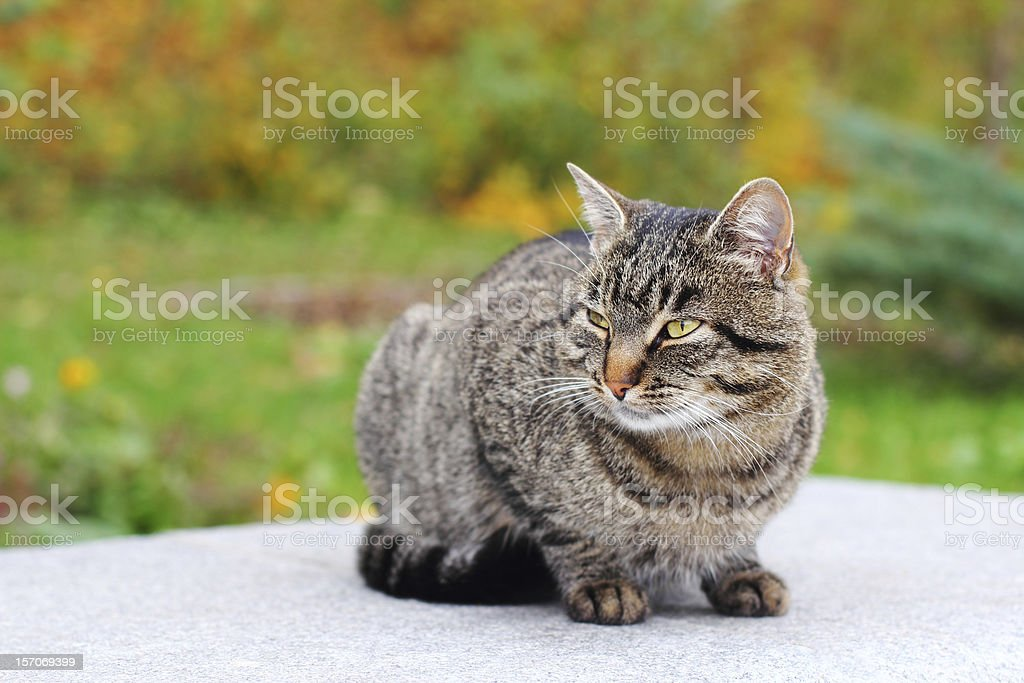 Cat outdoors stock photo