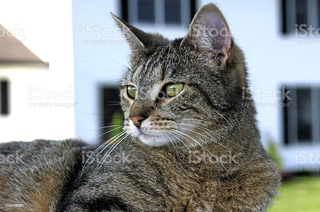 Cat Outdoors stock photo