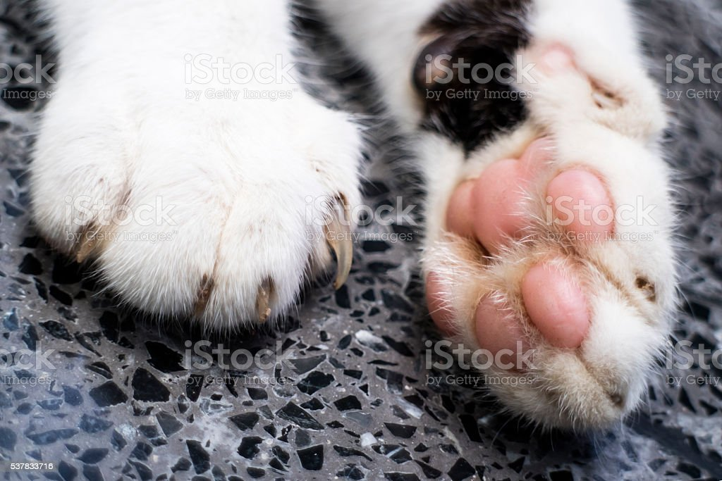 Cat paws stock photo