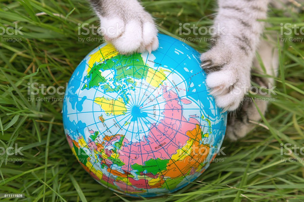cat paws playing global ball toy on the grass stock photo