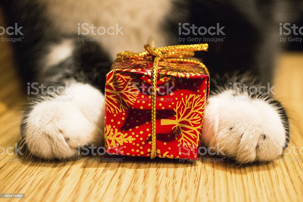 Cat paws with a red box stock photo
