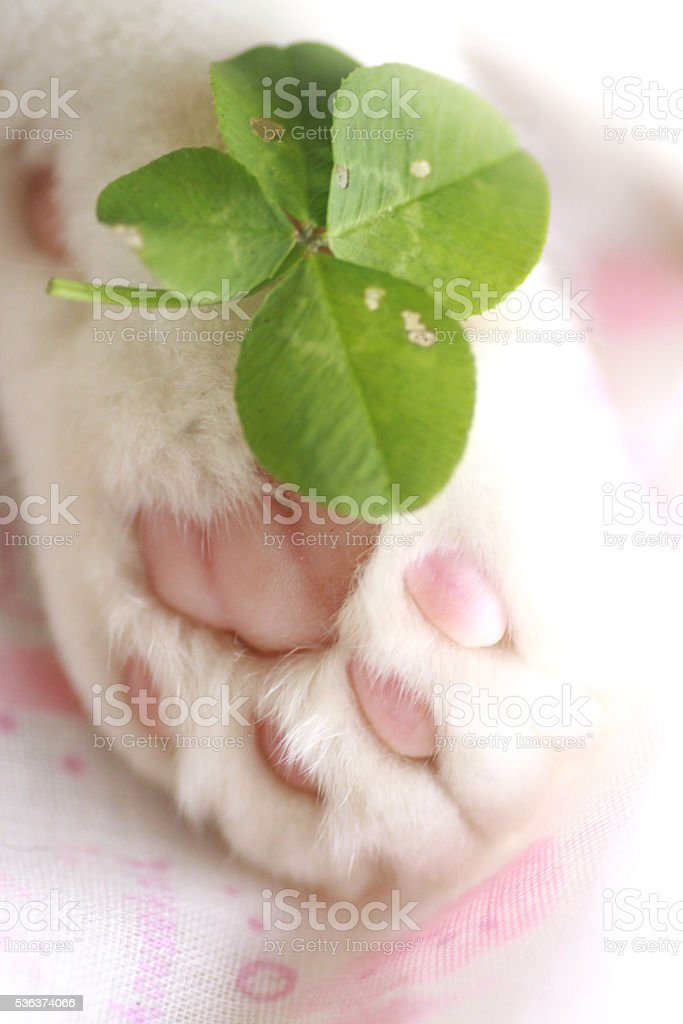 Cat paws and  four-leaf clover stock photo