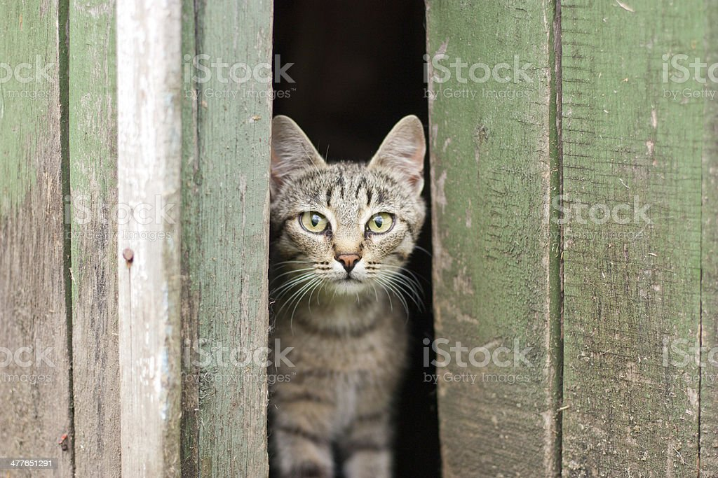 cat peek out fright stock photo
