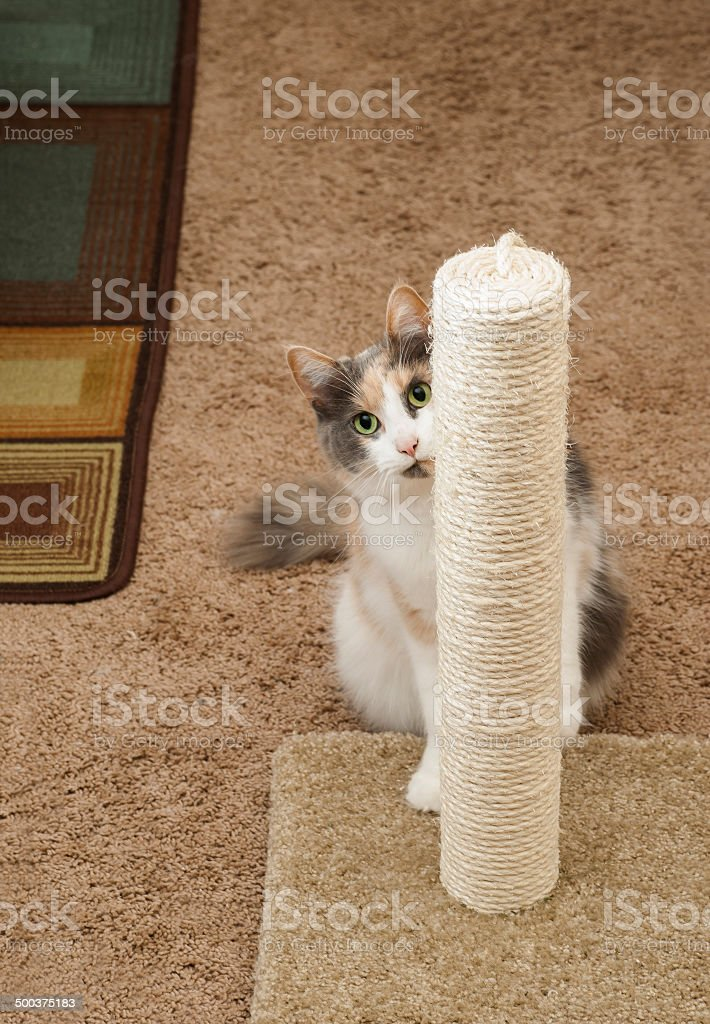 Cat Peeking around scratching post stock photo