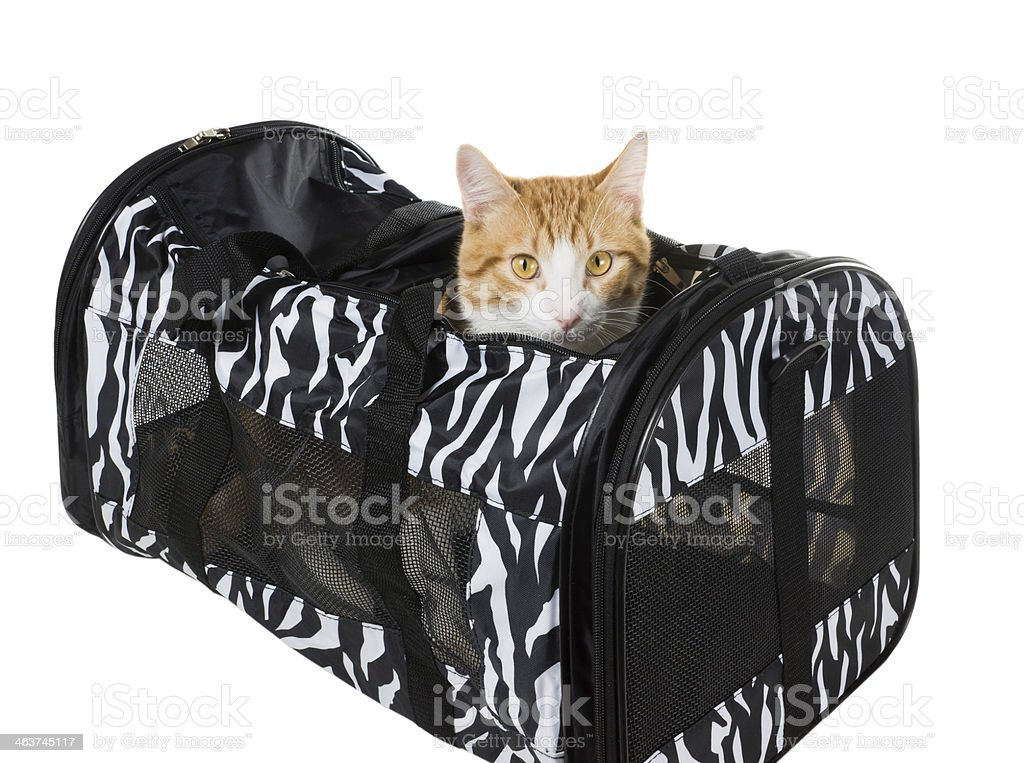 Cat peeking out of the bag stock photo