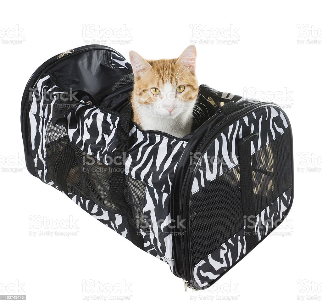 Cat peeking out of the bag-carrying stock photo
