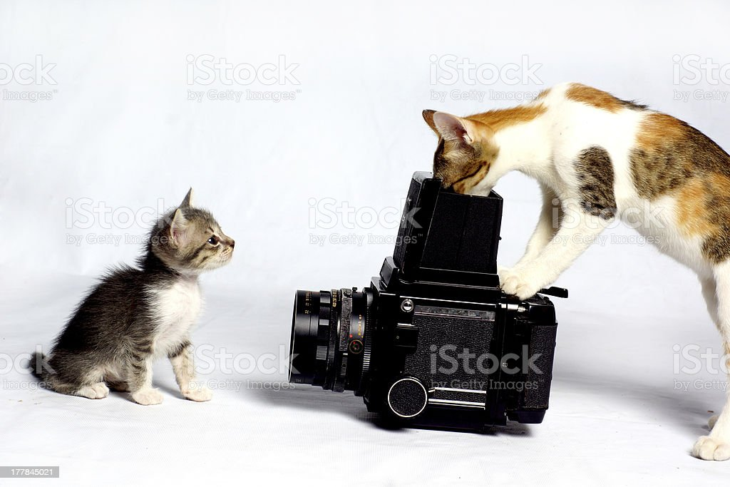 cat photographer stock photo