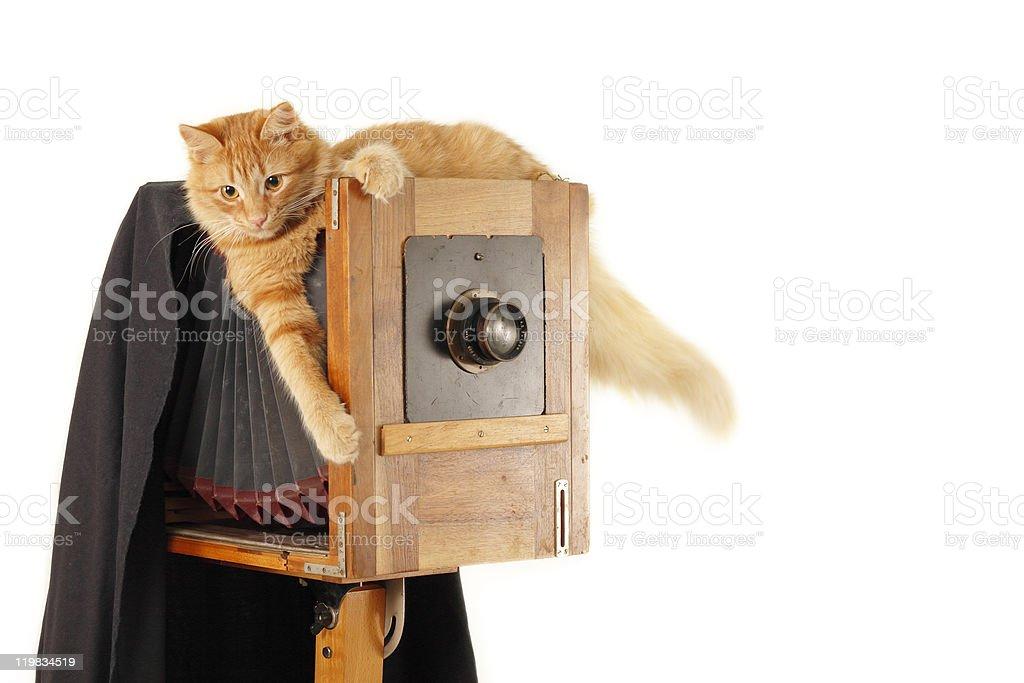 cat photographer with vintage camera in studio stock photo